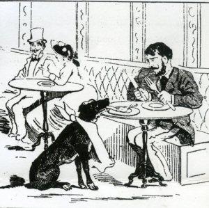 El perro Paco en Fornos