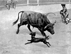El Perro Paco incordiando a un toro BlyN 24-7-1910
