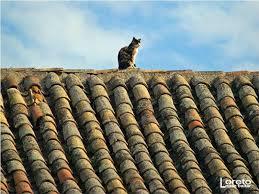 Gatos en el tejado2