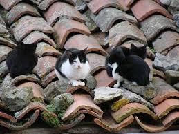Gatos en el tejado3